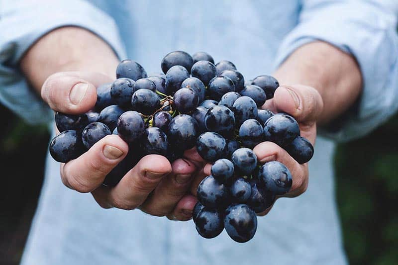 bunch of grapes in hand